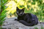 Имена для черных кошек девочек красивые для самых красивых