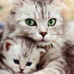 Один год кошки сколько человеческих лет идет 1 год