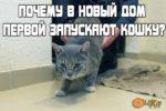 Кота или кошку нужно запускать в новую квартиру кошку