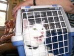 Как вы возите кошку в машине на дальние расстояния