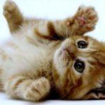Какой корм лучше давать кошке сухой или в пакетиках