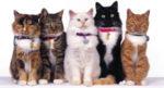 Все породы кошек с фото описанием ценой и названиями