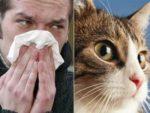 Как у человека проявляется аллергия на кошек у детей