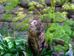 Через какое время действуют таблетки от глистов у кошек