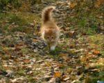 Уживутся ли кастрированный кот и не стерилизованная кошка