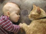 Может ли человек заразиться от кошки ленточным глистом