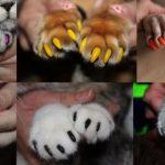 Силиконовые накладки на когти для кошек отзывы ветеринаров
