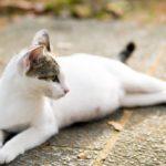 Кошка рожает мертвых котят что делать ходит мяукает