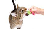 Натурального питание для кошек что для этого нужно