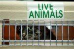 Какие прививки должны быть у кошки для перелета в самолете