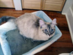 Что делать если кошка несколько дней не ходит в туалет