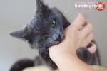 Что делать если ребенка укусила кошка в деревне чужая