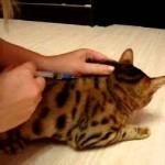Фармазин инструкция по применению в ветеринарии для кошек