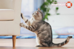 Что сделать с кошкой что бы она не драла мебель и обои
