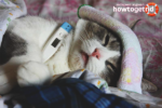 Как понизить температуру у кошки в домашних условиях