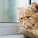 Когда кошку можно выпускать на улицу после прививки