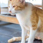 У кошки сильный понос что делать в домашних условиях