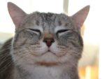 Почему кошки выпускают когти когда мурлыкают выпускают когти