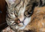 Что делать если у кошки глаза наполовину закрыты пленкой
