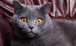 Если поцарапала кошка нужно ли делать прививку от бешенства
