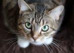 Сочинение на тему моя любимое животное кошка 5 класс