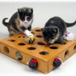 Игрушка для кошки с шариком по кругу своими руками