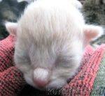 Роды у кошки с какой периодичностью рождаются котята