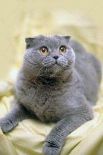 Как добраться до остановки матроса кошки в севастополе