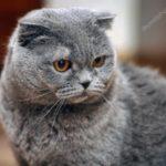 Как забрать добычу женщины кошки у двуликого в музее