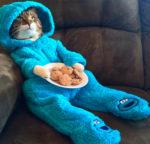 Кошки фото смешные с подписями новые очень смешные