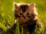 Какую воду давать кошке если не из под крана то какую