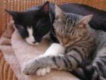 В какой стране мира на 10 жителей приходится 9 кошек