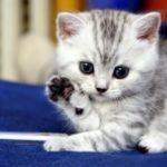 В слове кошка сколько звуков и сколько букв и звуков