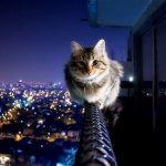 Что делать если кошка упала с 5 этажа и повредила лапу