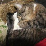 Папа ночью унес моего кота у него аллергия на кошек