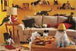Головоломка в комнате 4 угла в каждом углу сидит кошка
