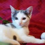 Как будет на английском языке глаза у кошки зеленые