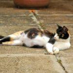 Можно ли использовать капли от блох для кормящей кошки