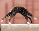 Как определить есть у кошки котята или только будут