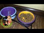 Можно ли сочетать сухой корм с натуральной пищей кошкам