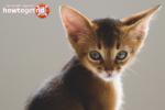 Как у кошки почистить уши от серы в домашних условиях