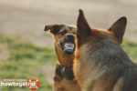 Как отучить собаку бросаться на других собак и кошек