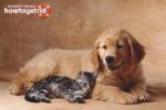 Как сделать так чтобы собака с кошкой были друзьями
