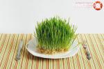 Как проращивать пшеницу в домашних условиях для кошек