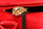 Что нужно для того чтобы перевезти кошку на машине