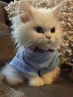 Если кошка несколько дней не ходит в туалет по маленькому