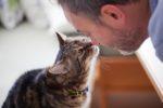 Могут ли паразиты передаваться от кошки к человеку