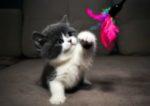 Голубая черепаховая кошка голубой кот какие будут котята
