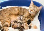 У кошки увеличились молочные железы фото до и после