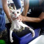 Если кошка чихает и насморк что делать чем лечится